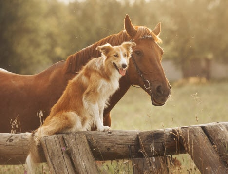 aspca dog horse min